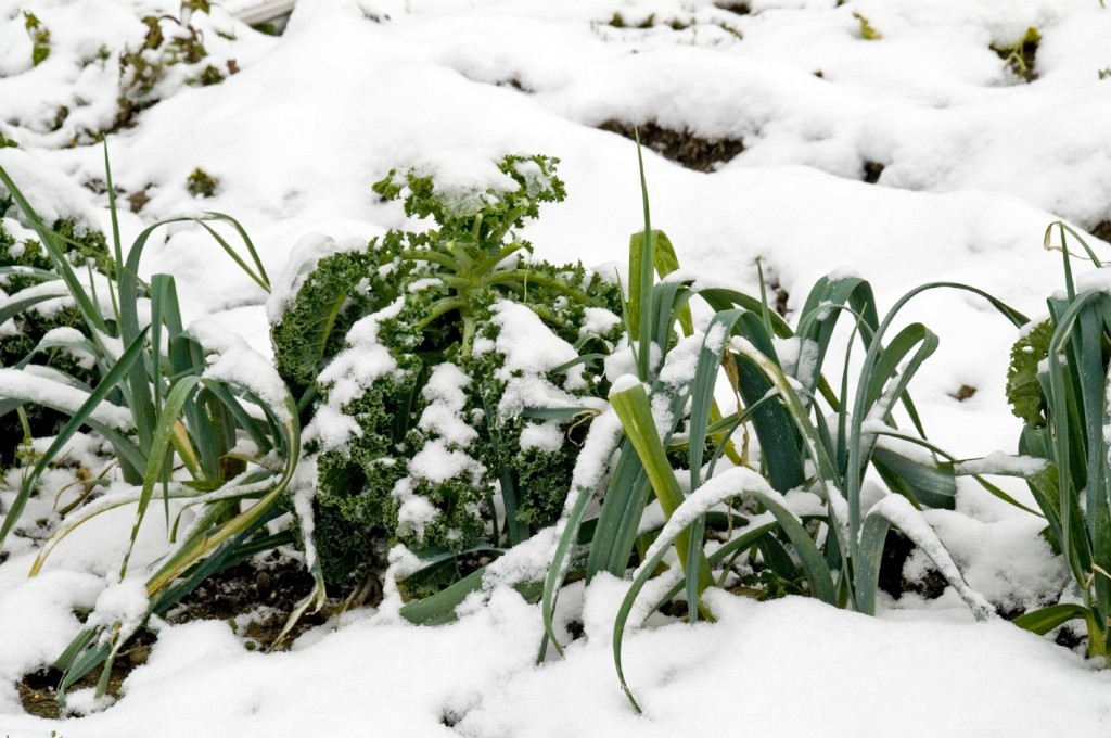 How to Grow Food Indoors in Winter