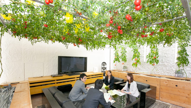 he meeting room is also covered with colorful hybrid tomato varieties.