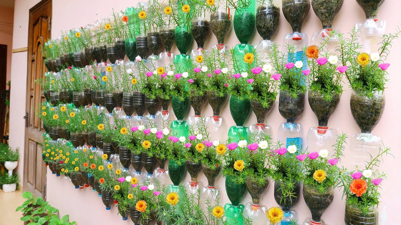 Amazing Vertical Garden Using Plastic Bottles, Portulaca (Moss Rose) Garden on Wal